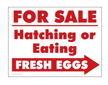 For Sale Hatching or Eating Eggs Right arrow sign image